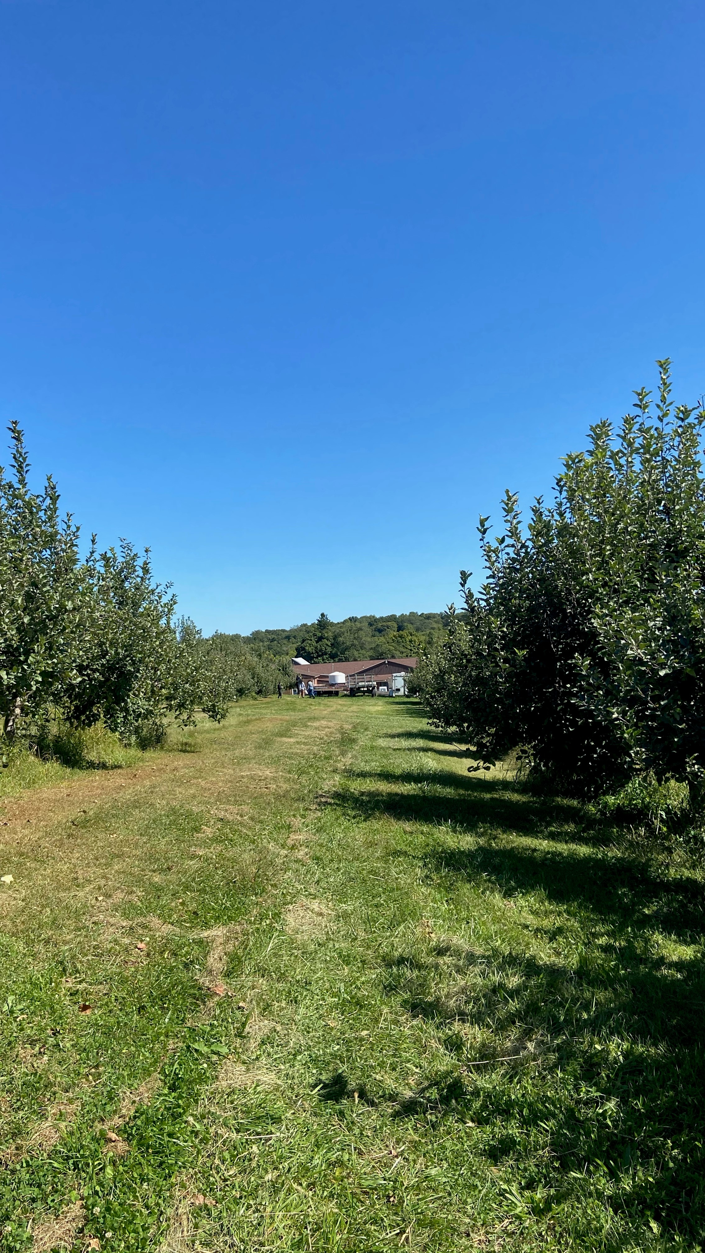 sunny apple orchard