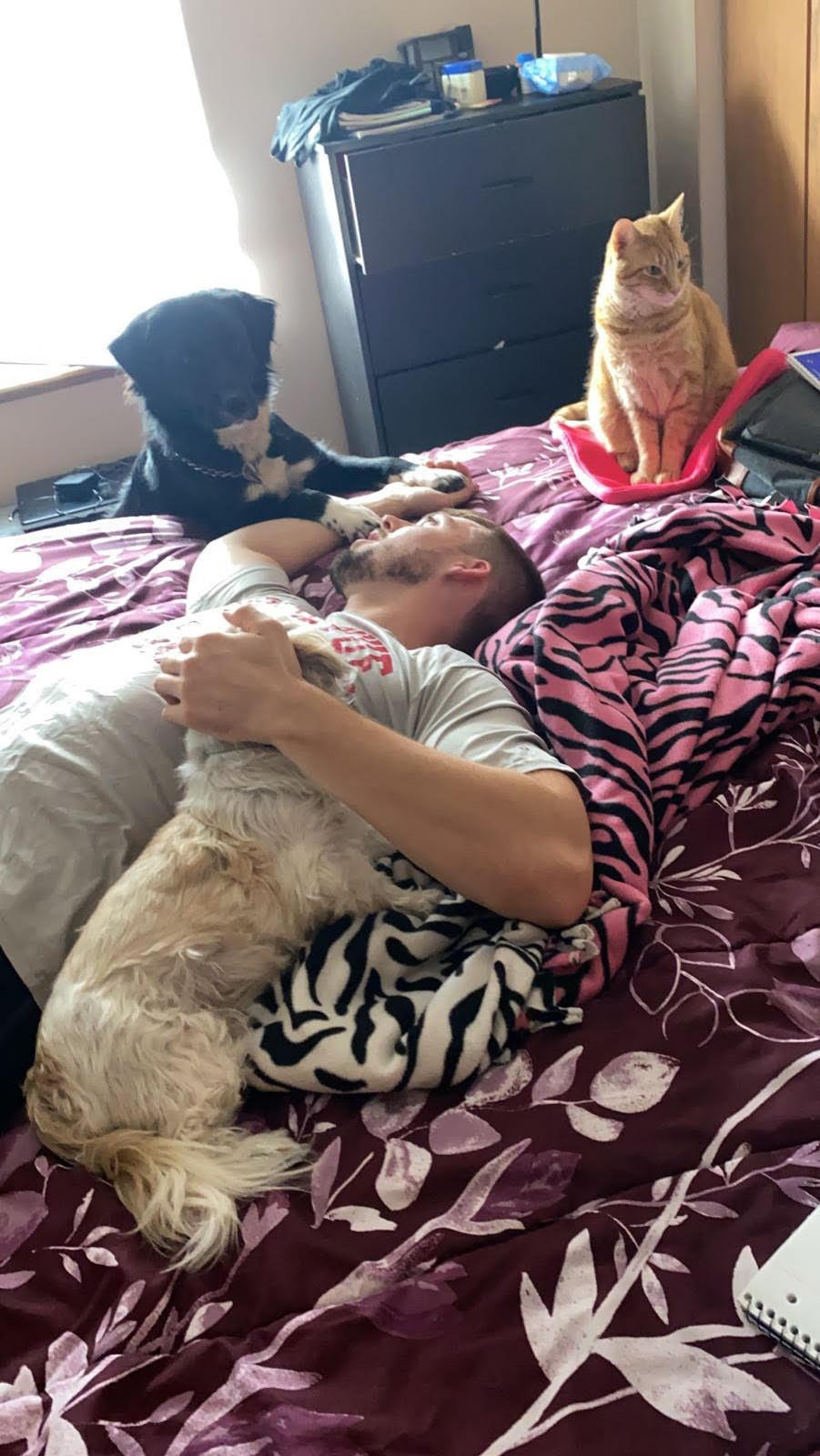 man laying on bed with a black dog, a white dog, and an orange cat