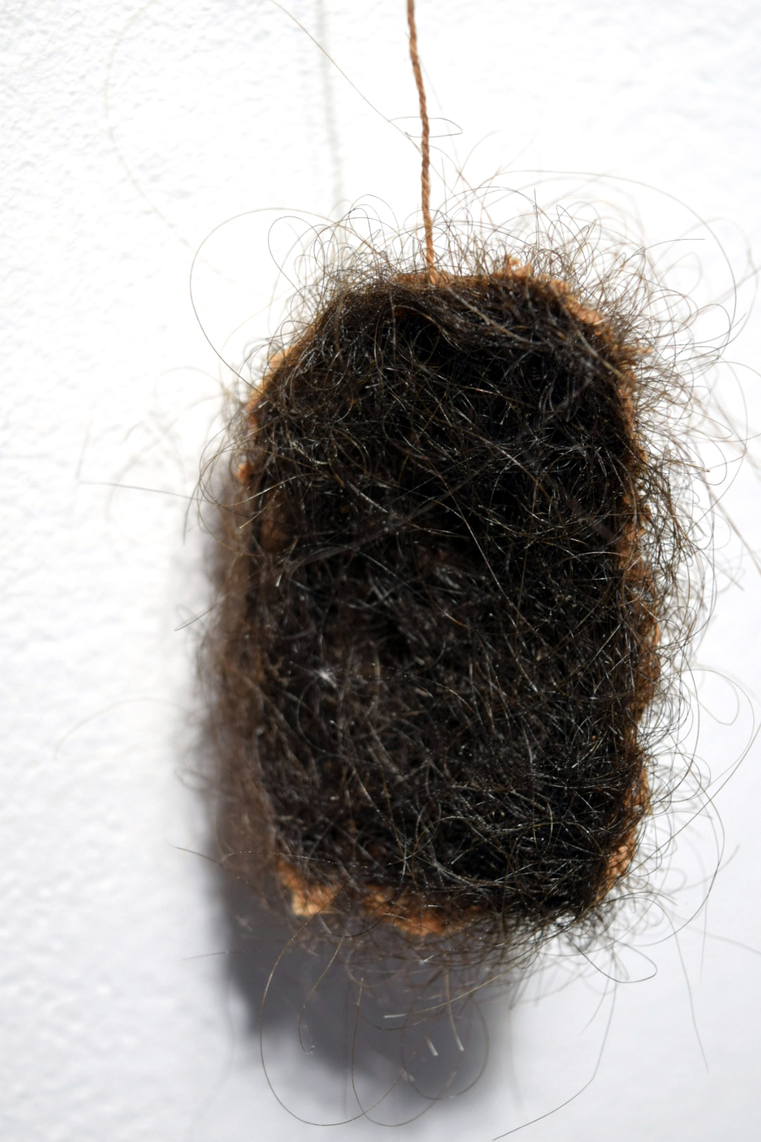 Close up image of a tea bag stitched and covered entirely with dark brown hair. The hair is matted into the fabric of the teabag. The very bottom left corner of the tea bag is visible to the viewer and is a light tan color.