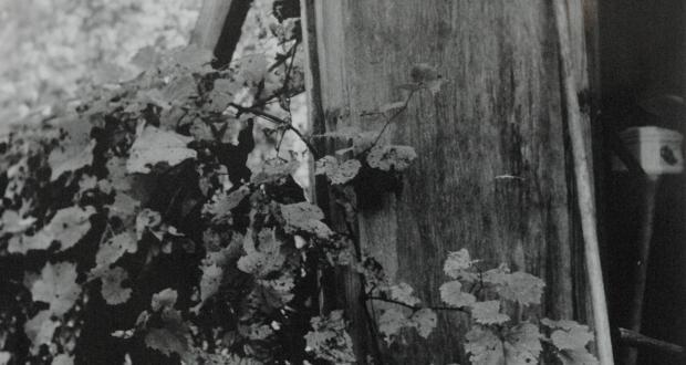 Noelle Klein, Nature's Nurture, B&W Film on Fiber Paper, 2014